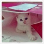 InstagramCapture_aaa64b4c-586b-41dd-808a-6d78c26e2888_jpg