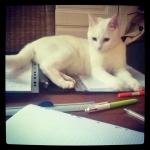 InstagramCapture_0c98e078-2d69-4b88-956e-82f6bbea745c_jpg
